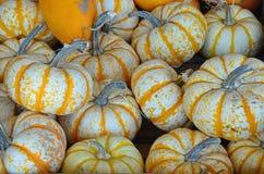 Тыквы апельсина и белых striped Стоковая Фотография