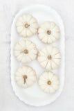 тыквы белые Стоковая Фотография RF