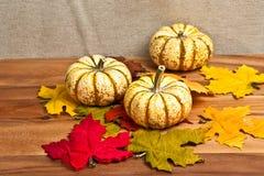 3 тыквы благодарения и высушенных листья Стоковые Фотографии RF