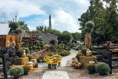 Тыквы выходят на рынок на официальный праздник в США в память первых колонистов Массачусетса и хеллоуин стоковые фото