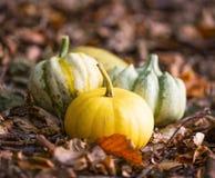 Тыквы в высушенных листьях внешних, тыквы падения наваливают harves Стоковое Изображение RF