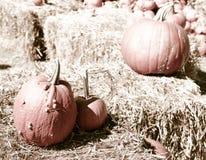 Тыквы в корзине и декоративных corns Стоковое фото RF