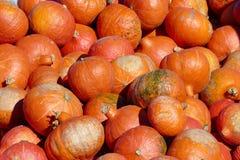 Тыквы в красных апельсине, предпосылке или обоях Стоковые Изображения RF