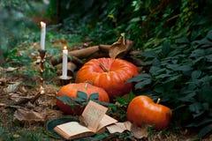 Тыквы в саде Вечер хеллоуина Стоковое фото RF