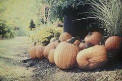 Тыквы в саде осени Стоковые Фото