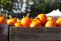 Тыквы для продажи на заплате тыквы в осени Стоковые Фотографии RF