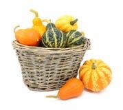 Тыквы зеленого цвета, оранжевых и желтых орнаментальные в корзине Стоковое Изображение