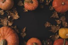 Тыквы и высушенные листья Стоковая Фотография