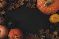 Тыквы и высушенные листья Стоковые Фотографии RF