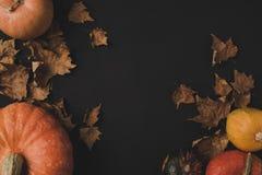 Тыквы и высушенные листья Стоковое Изображение RF