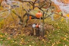 Тыквы и другие детали оформления на хеллоуин Стоковое Фото