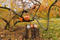 Тыквы и другие детали оформления на хеллоуин Стоковое фото RF
