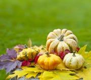 Тыквы и листво осени Стоковое Фото