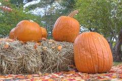 Тыквы и стога сена хеллоуина Стоковое Фото