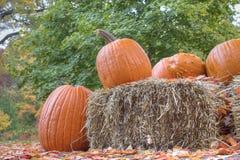 Тыквы и стог сена хеллоуина Стоковая Фотография RF