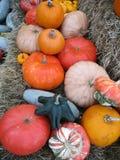 Тыквы и тыквы осени Стоковая Фотография RF