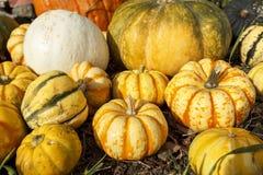 Тыквы и Gourds Стоковое фото RF