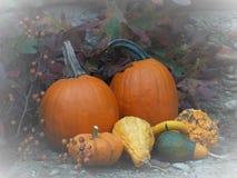 Тыквы и Gourds стоковые фотографии rf
