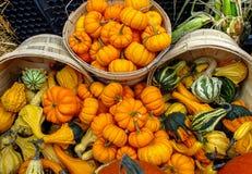 Тыквы и Gourds Стоковое Изображение RF