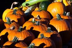 Тыквы и Gourds Стоковые Изображения RF