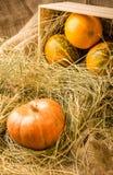 тыквы на соломе Стоковые Фотографии RF