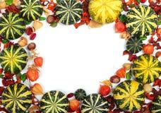 тыквы осени белые Стоковые Фото