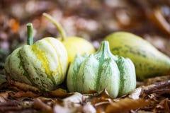 Тыквы осени наваливают в высушенных листьях, внешнем harvestin падения Стоковые Изображения