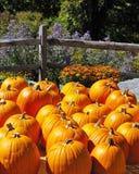 тыквы осени цветастые Стоковое Фото