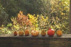 тыквы сада Стоковое Фото