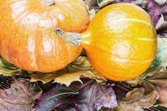 Тыквы свежей продукции на хеллоуин Стоковое фото RF