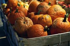 Тыквы хеллоуина оранжевые на продаже в магазине улицы на ноче и одном их при пугающая сторона нарисованная на ей для Стоковые Фото