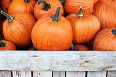 Тыквы хеллоуина оранжевые на продаже в магазине улицы Стоковое фото RF