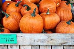 Тыквы хеллоуина оранжевые на продаже менеджера в магазине улицы с ценником или ярлыке с знаком доллара США Стоковое Изображение RF