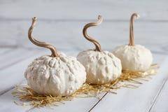 Тыквы хеллоуина на белых планках Стоковое Изображение RF