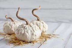 Тыквы хеллоуина на белых планках Стоковое Фото
