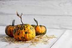 Тыквы хеллоуина на белых планках Стоковые Фотографии RF
