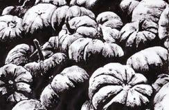 Тыквы Стоковое Изображение RF