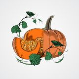 Тыквы Doodle Vector изображение краски нарисованное рукой в стиле шаржа Стоковое Изображение