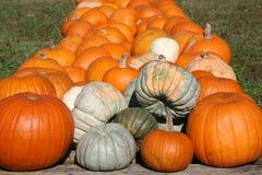 тыквы gourds Стоковая Фотография