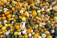 тыквы gourds стоковое изображение rf