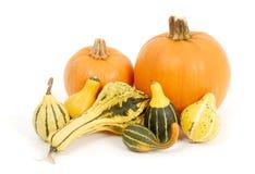 тыквы gourds стоковое изображение