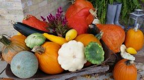 Тыквы & Gourds Стоковое Изображение