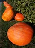 тыквы halloween Стоковые Фото