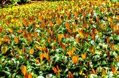 Тысяча золотистых листьев Стоковое фото RF