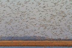 Тысяча кабелей ` птиц на голубом небе Стоковые Изображения