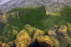 Тысячи небольших рыб в чистых водах озера Ohrid стоковое фото rf