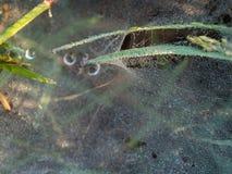 Тысячи падений росы на сети паука Стоковые Изображения RF