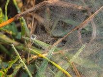 Тысячи падений росы на сети паука Стоковое Изображение