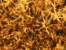 Тычинки Aleum Стоковая Фотография RF
