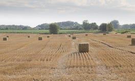 Тюкованное сено в поле фермы завальцовки Стоковые Фотографии RF